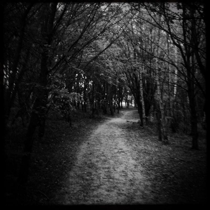 Charter Woods, Colchester - Spooky Innit!