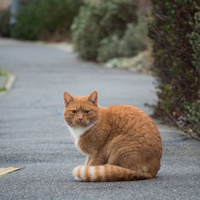 When you go out to test your new lens on the local wildlife and the neighbourhood ginger Tom wants to make friends.jpg