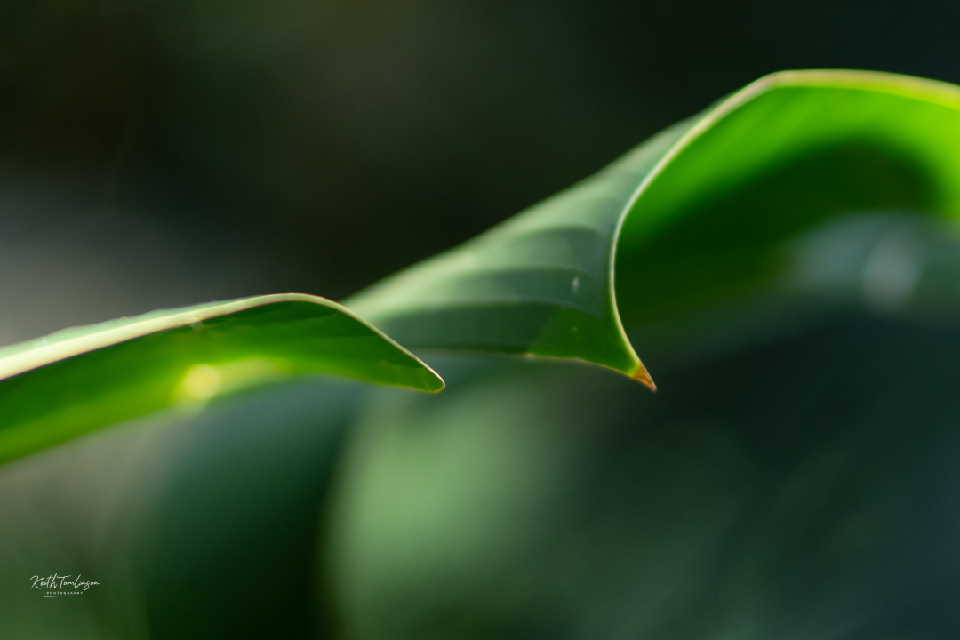 Leaves of tropical plants