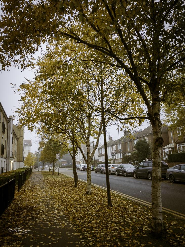 Autumnal street photo