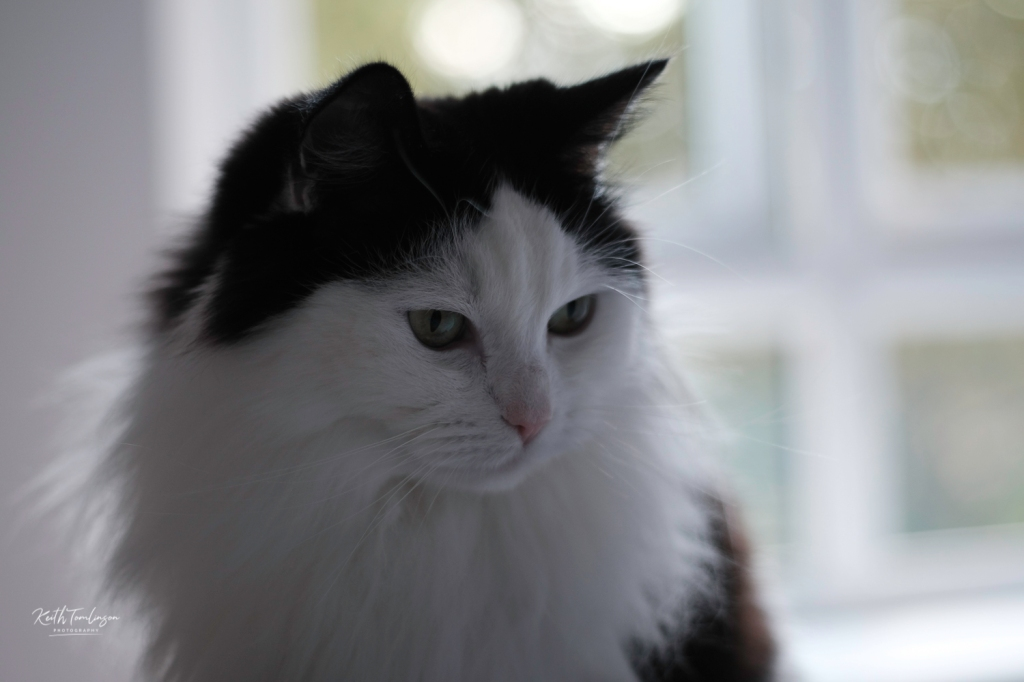 A photograph of my black and white cat Tilly