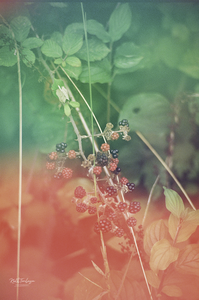 A washed out photo of some summer berries