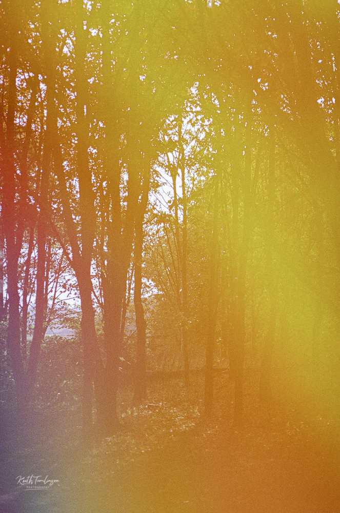 A colour washed photo of the woods near my house