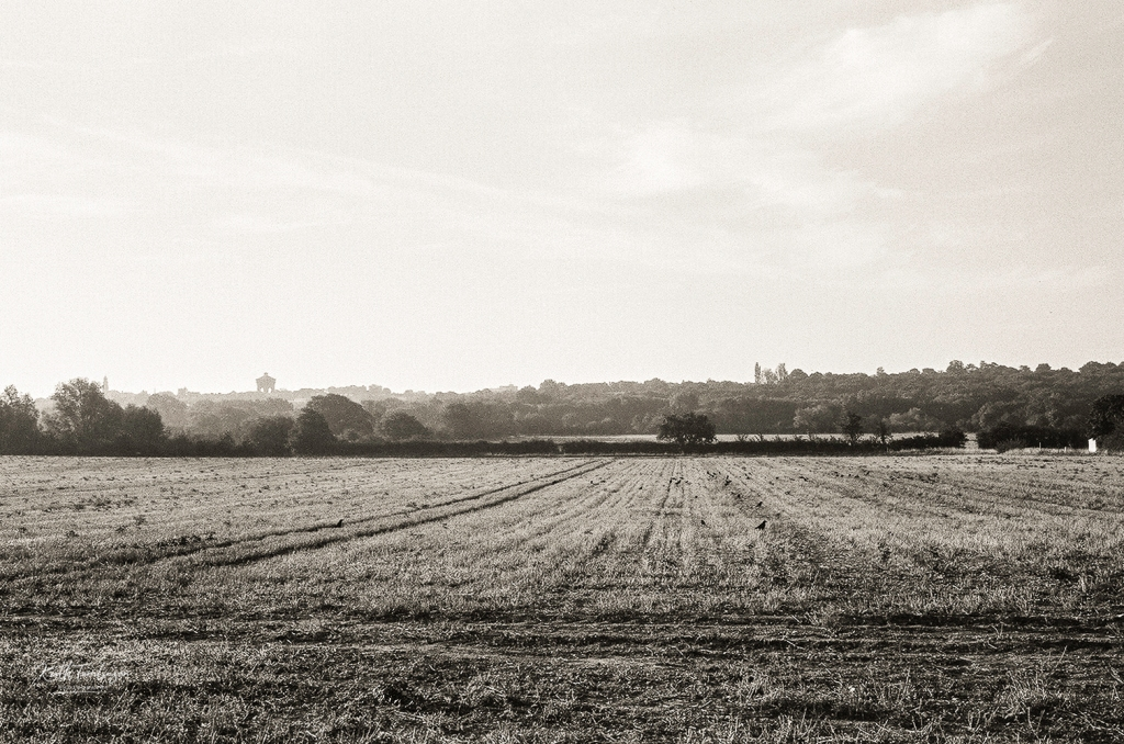 A landscape view of farmland in Essex