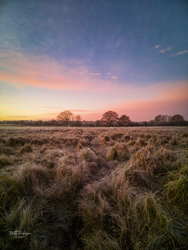 A sunrise landscape photo of trees, grasses and purple frosty hues