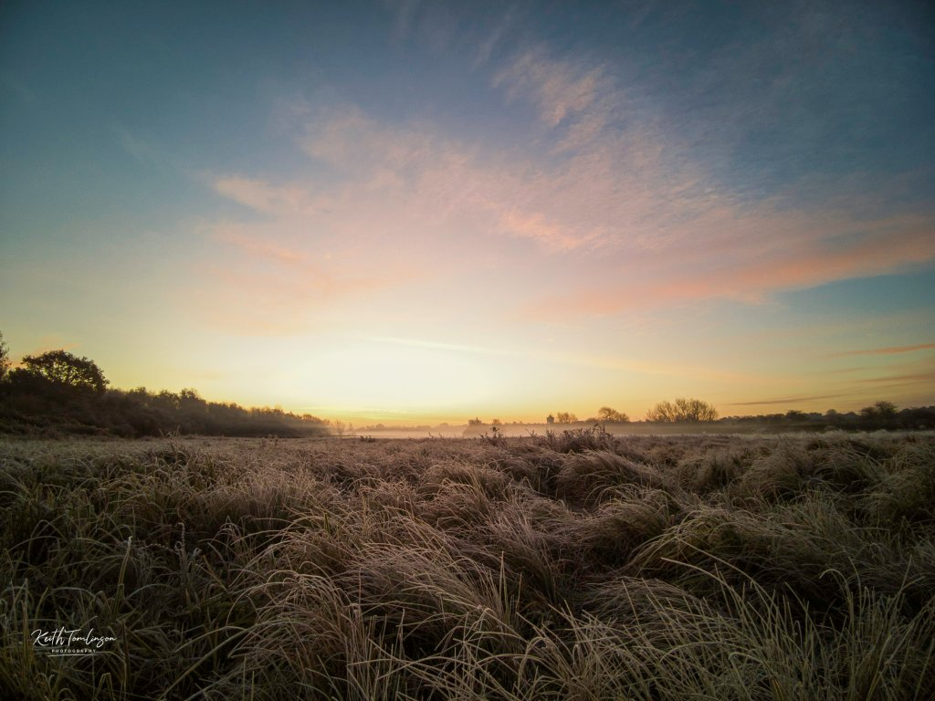Colourful sunrise and frosted grasses