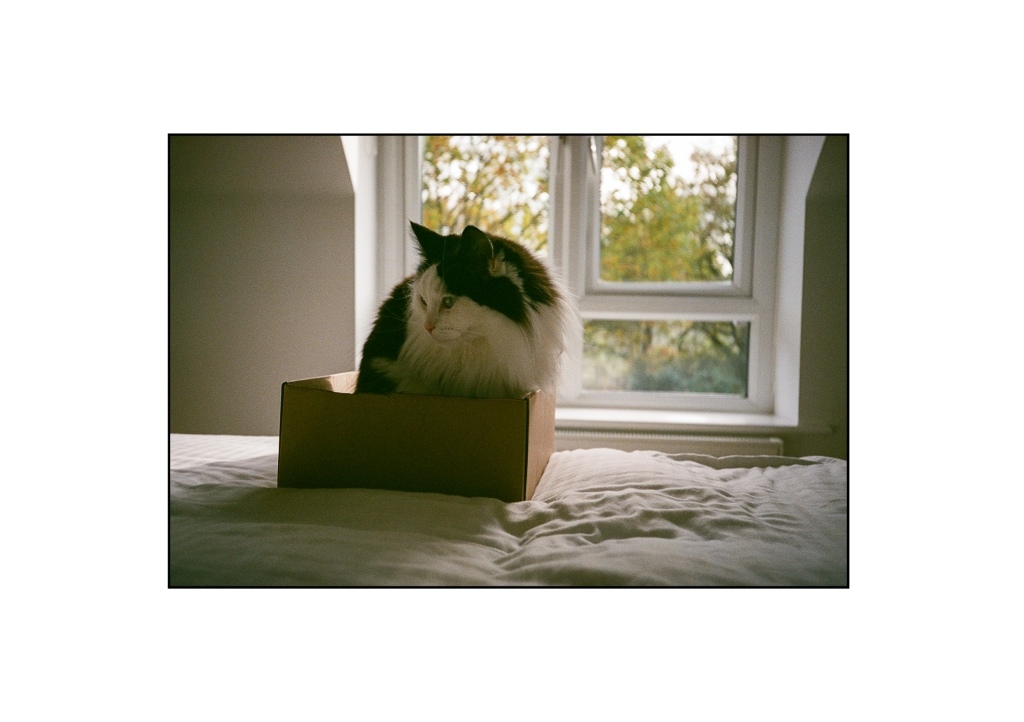 A photo of my cat Tilly in her box on our bed in front of the bedroom window