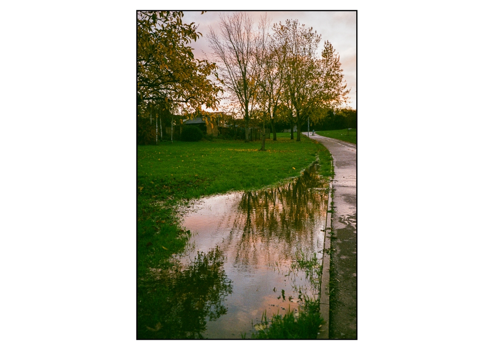 A tree reflected in a flooded pool following the rain