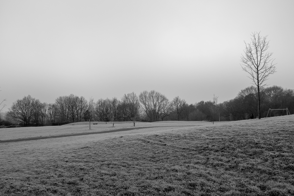 The local park looking frosty and cold