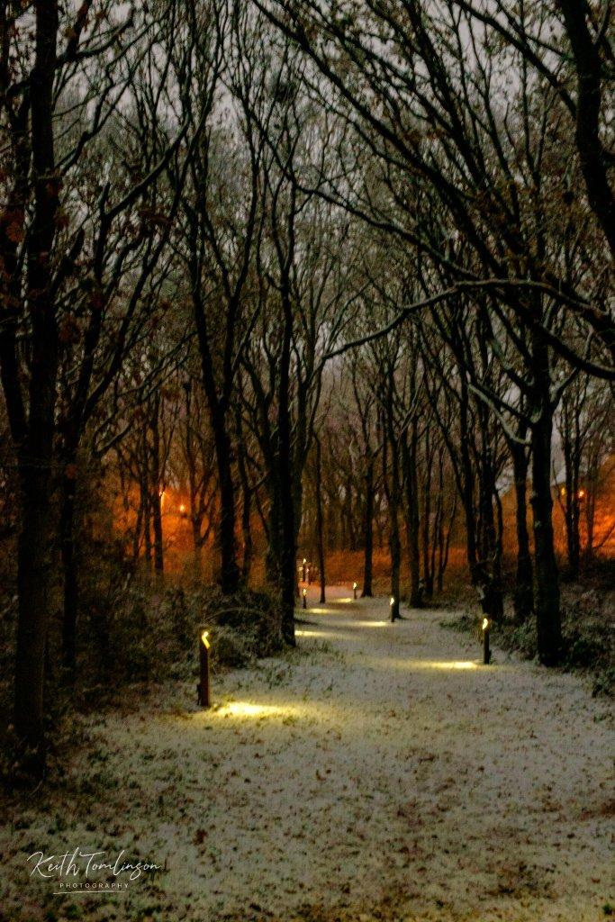 Snow fill woodland
