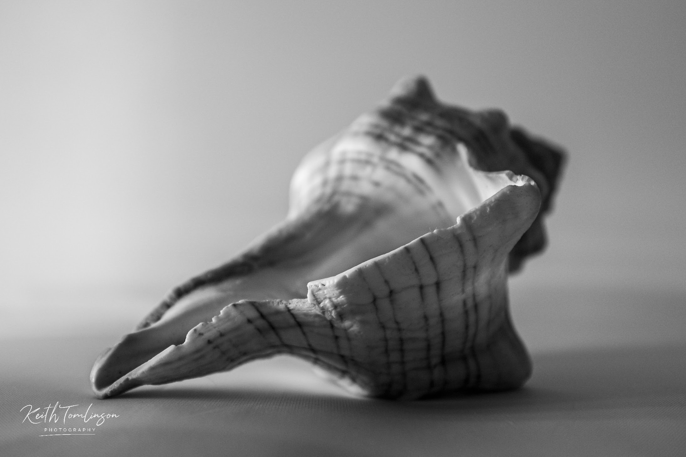 A black and white photograph of a sea shell