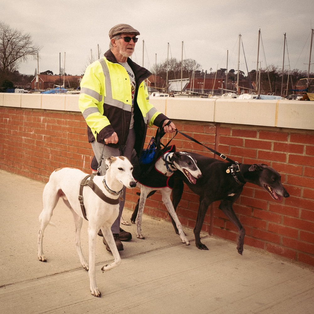 An old man walking his Whippets
