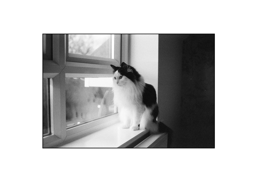 A black and white analogue photo of my cat looking out of the bedroom window watching the birds