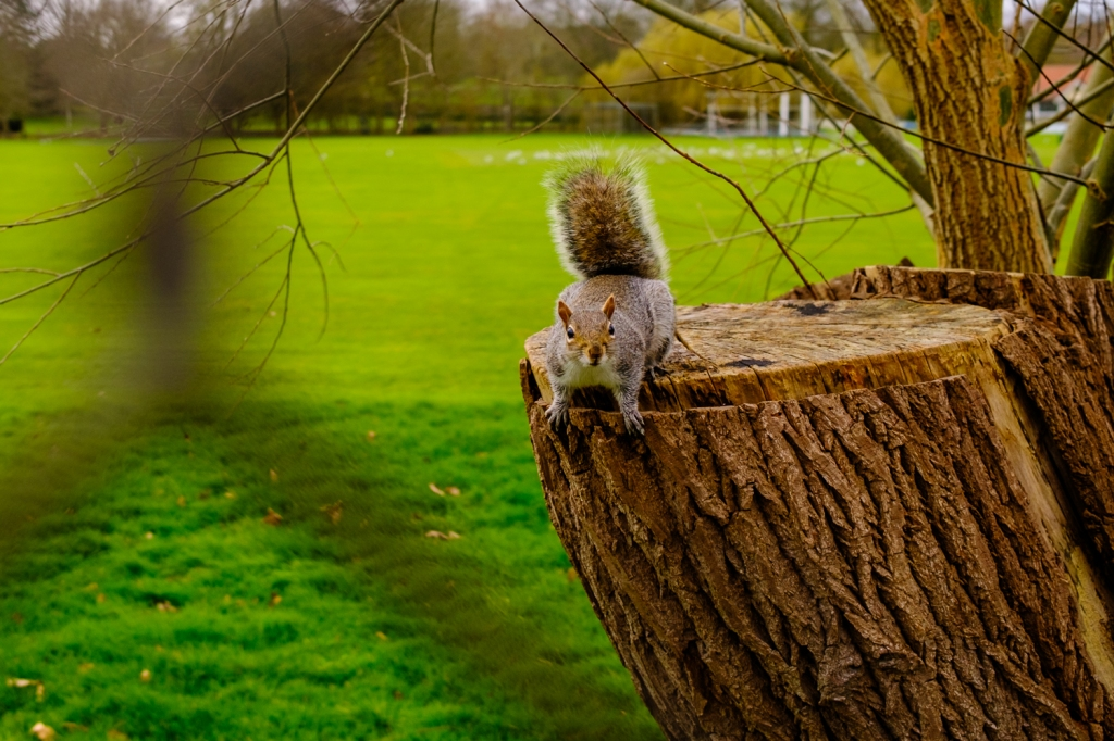 An inquisitive squirrel looks at me through a fence, waiting for a treat