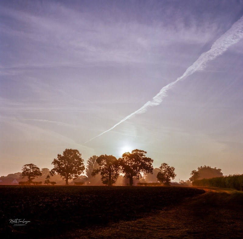 Sun breaks through the top of a row of trees as it rises over fields in England