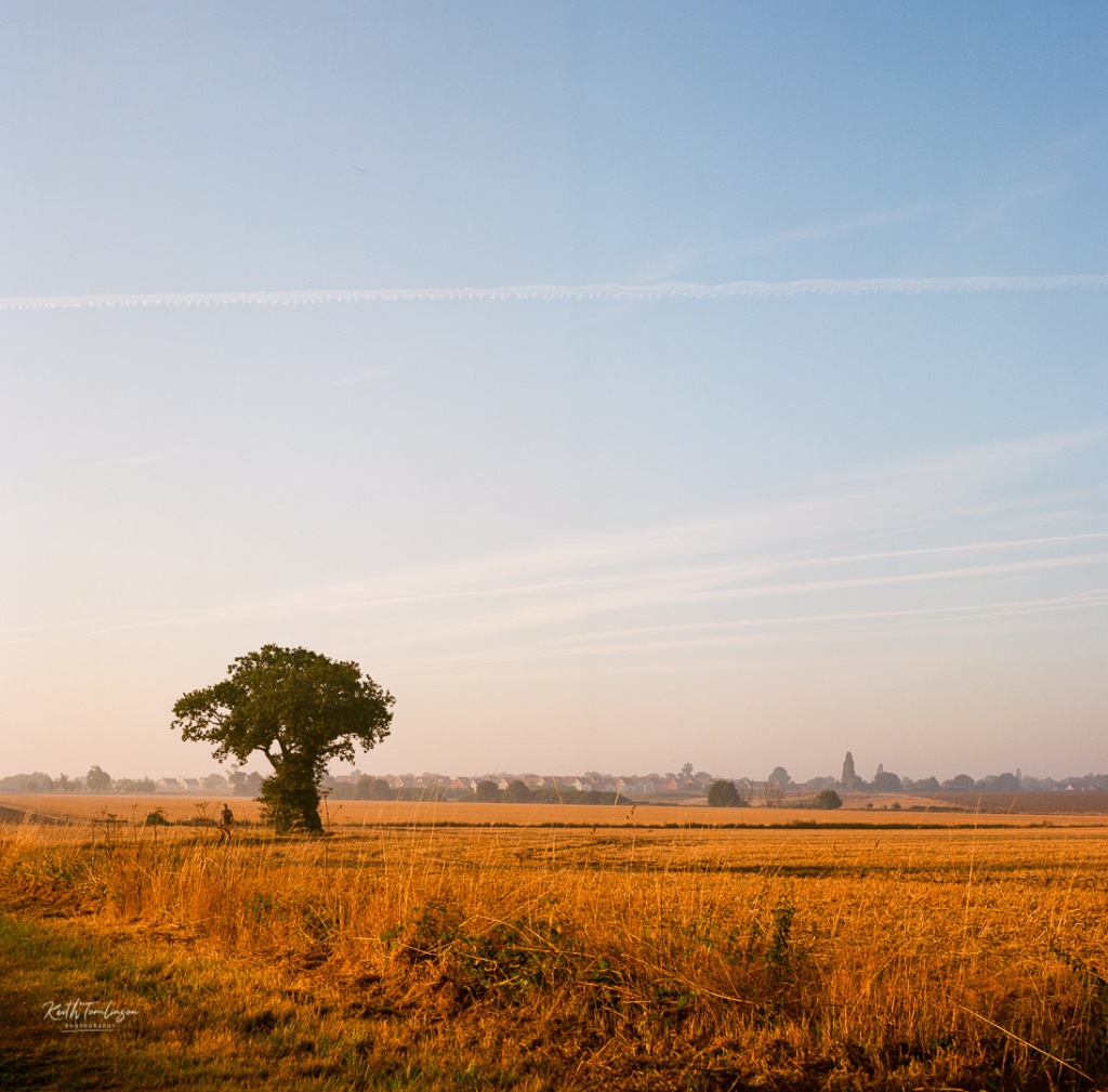 A man walking his dog, passes by a tree and open fields in Suffolk, England